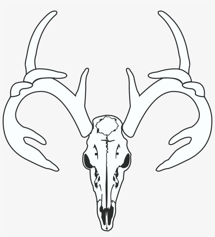 Gambar Rusa Terhebat Deer Skull Hunt Gambar Tengkorak Kepala Rusa Free Transparent
