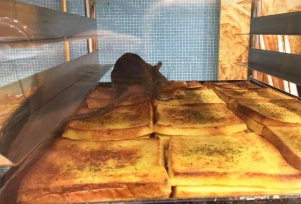 komugi bakery malaysia mohon maaf siasat insiden tikus atas roti