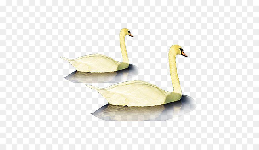 kisspng duck goose ganso poster goose 5a7c692b9b0645 059411231518102827635 jpg