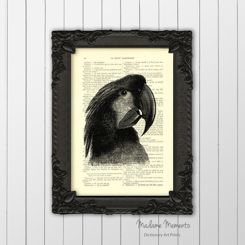 Poster Baboon Mandrill Bernilai Cockatoo Art Print Tropical Bird Poster Black and White Parrot Etsy