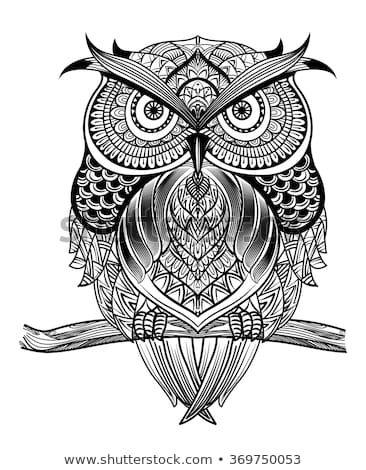 Made By Special Operations Sketsa Gambar Hewan Burung Hantu