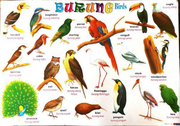 Poster Burung Puyuh Power Jual Poster Burung Birds Di Lapak Bumi Permata Javagemstone