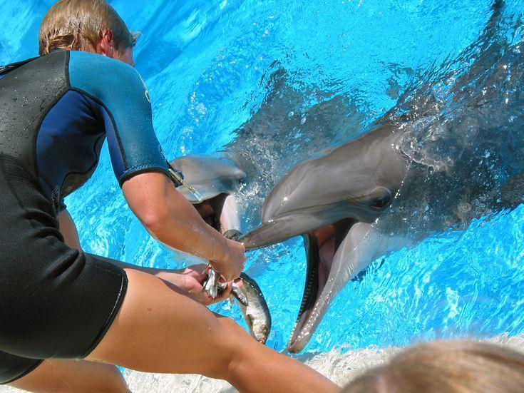 feeding dolphins 139865108 5acedf7d3128340036b8ed89 jpg