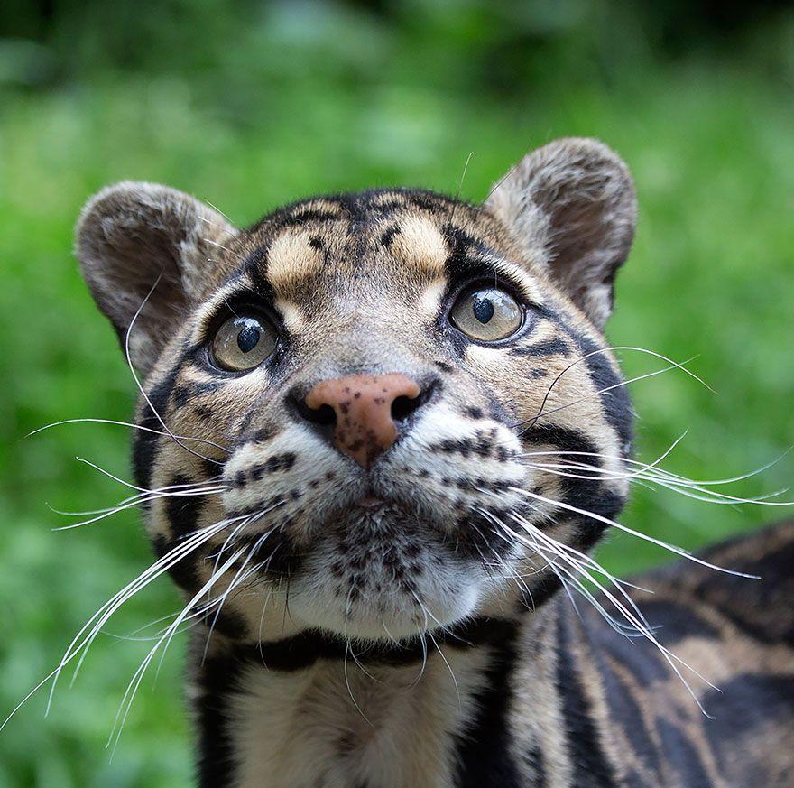 Poster Harimau Dahan Bernilai 11 Undang Undang Pelik Seluruh Dunia