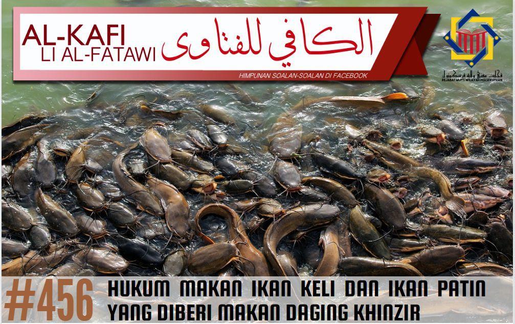 al kafi 456 hukum makan ikan keli dan ikan patin yang diberi makan daging khinzir