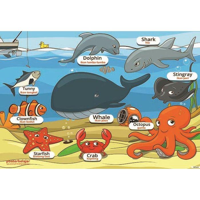Poster Ikan Pari Penting Jual Tipe 04 Poster Binatang Belajar Dunia Ikan Laut Kota Cimahi
