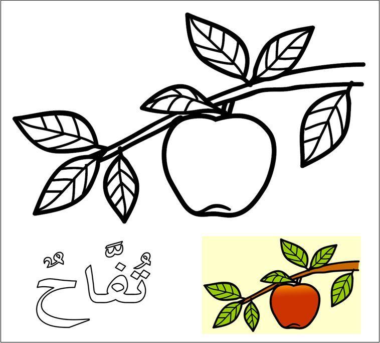 muat turun segera pelbagai contoh gambar buah apel untuk mewarna yang bermanfaat dan boleh di muat turun dengan mudah