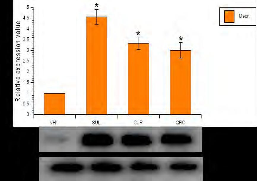 figure 1 effects of intraperitoneal administration of 50mg kg sulforaphane curcumin and quercetin