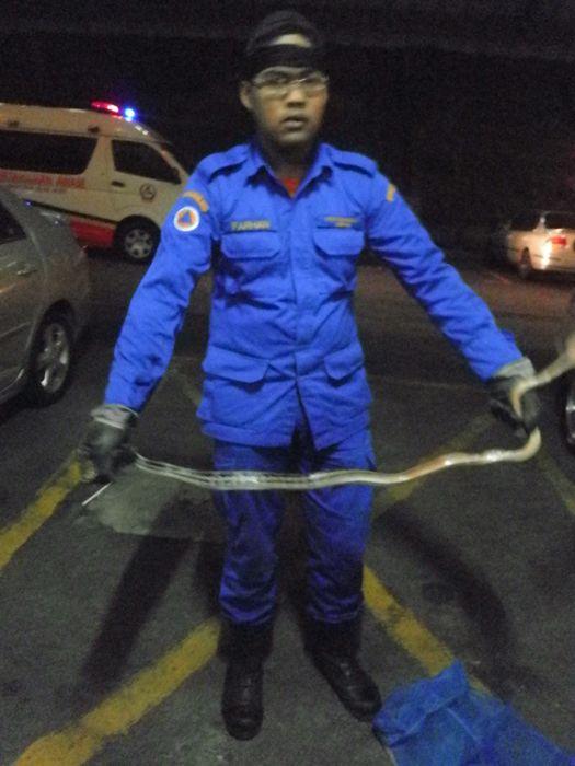 gambar penangkapan ular jenis rusuk kerbau tu syabas kepada security sri ledang condo jabatan pertahanan awam sebab berjaya jalankan tugas