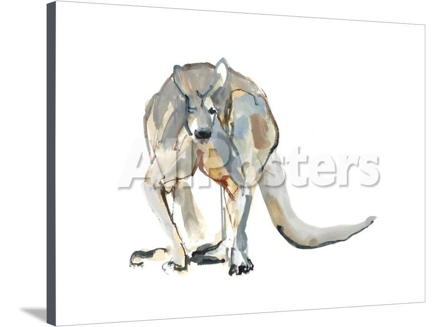 boxer red kangaroo 2012 giclee print by mark adlington at allposters com